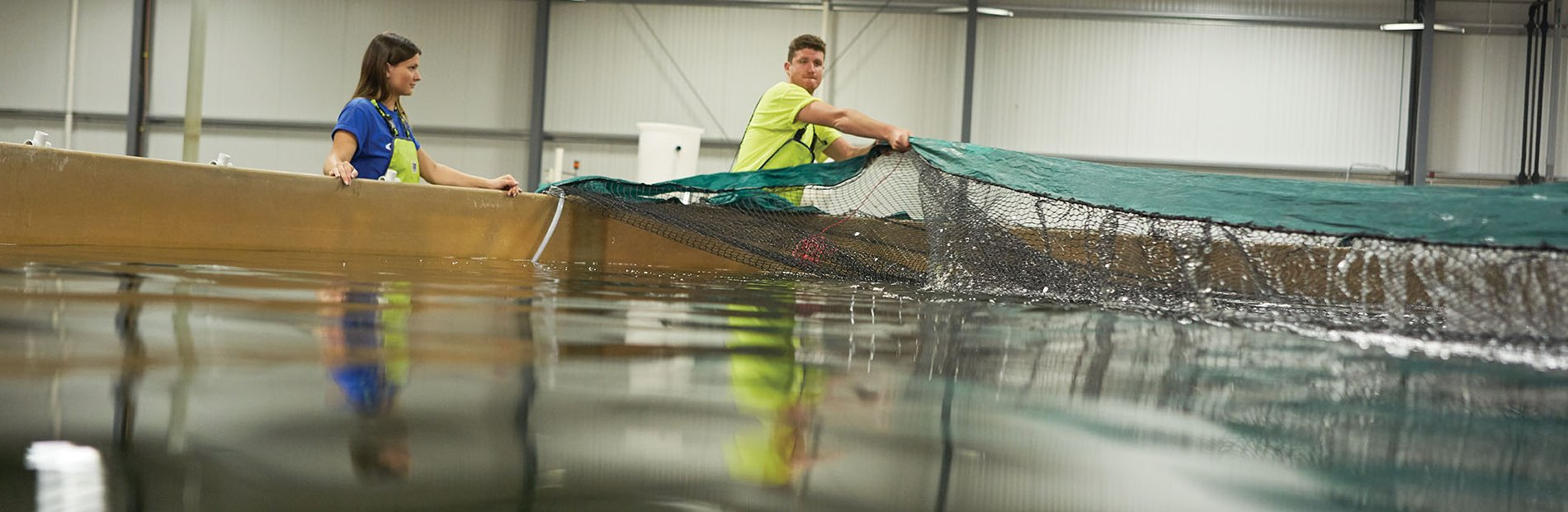 AquaBounty employees tending to nets located in the salmon tanks in facility