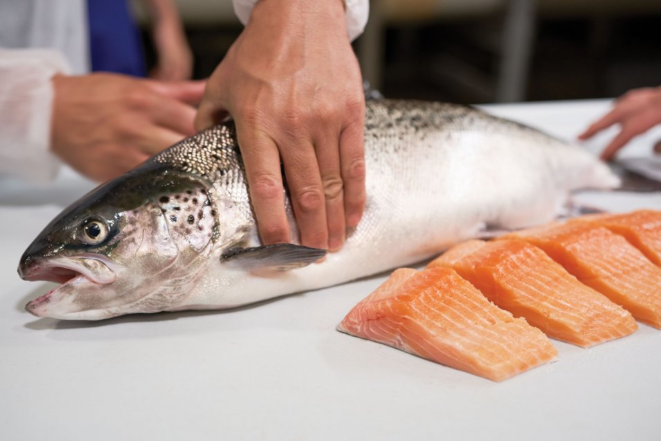 Salmon being held by hand